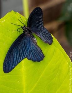 Butterflies-27