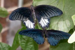 Butterflies-31
