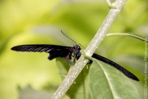 Butterflies-36