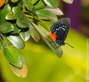 Butterflies-46