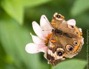 Butterflies-57